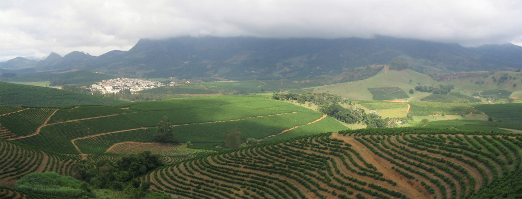 A coffee arabica plantation in Brazil. Source: Wikipedia