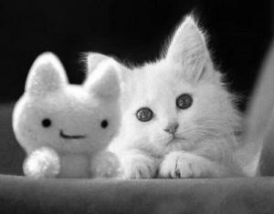 cute-cat-color